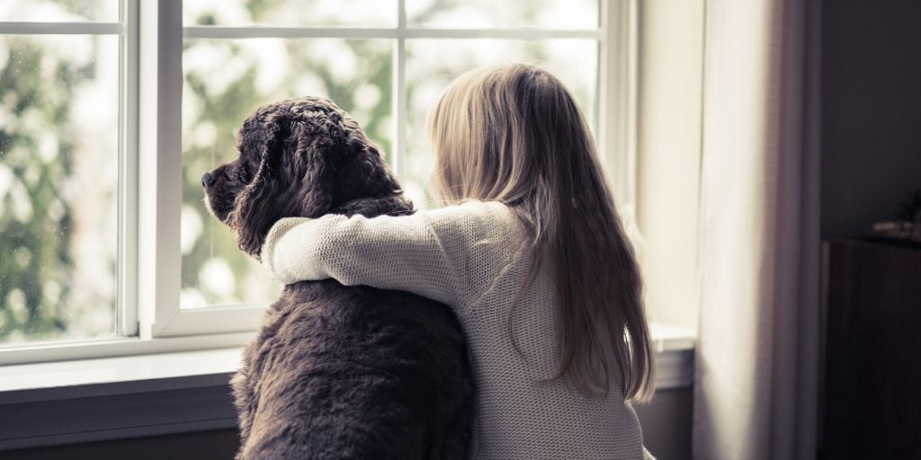 dog and girl gazing out apartment window