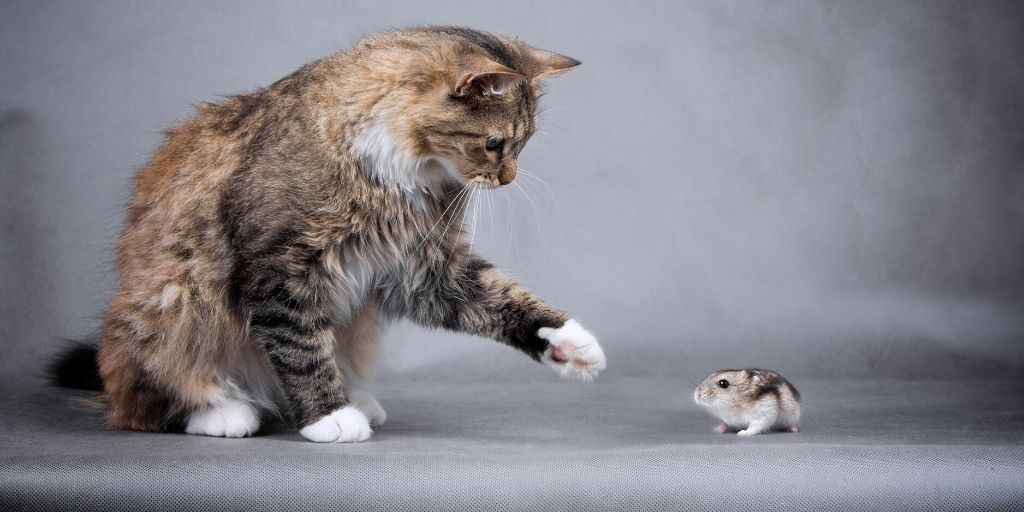 cat with hamster