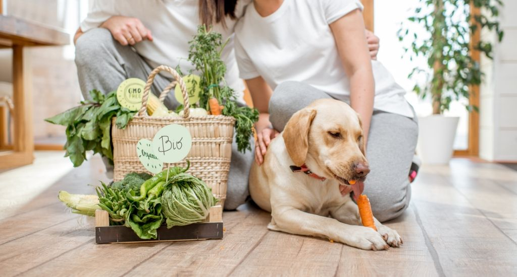 dog eating carrot with vegetables