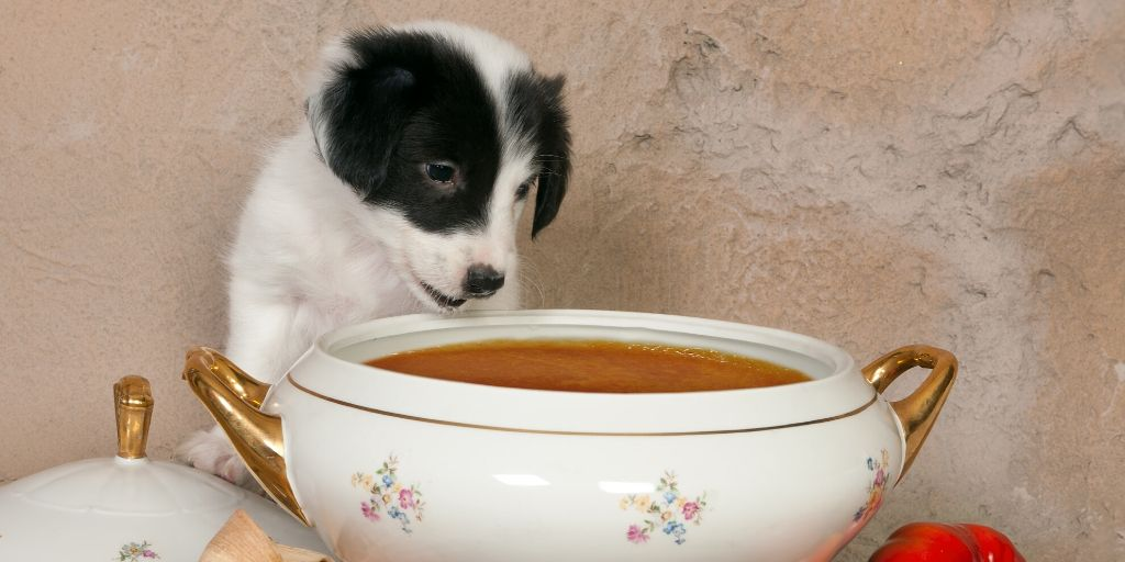puppy eating tomato soup
