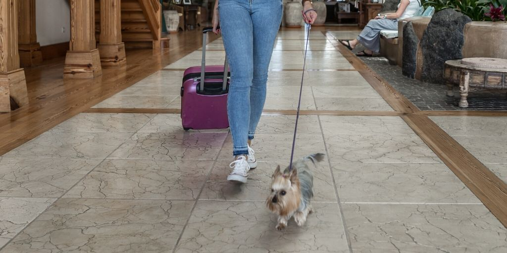 dog walking through hotel lobby with suitcase