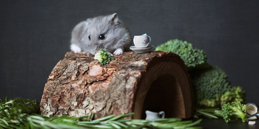 hamster dining on fine foods