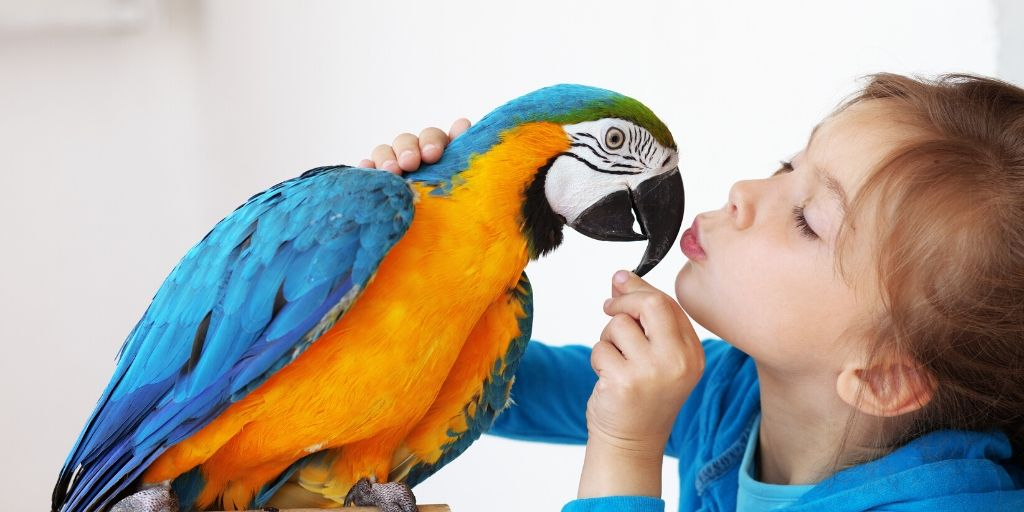 macaw giving girl a kiss