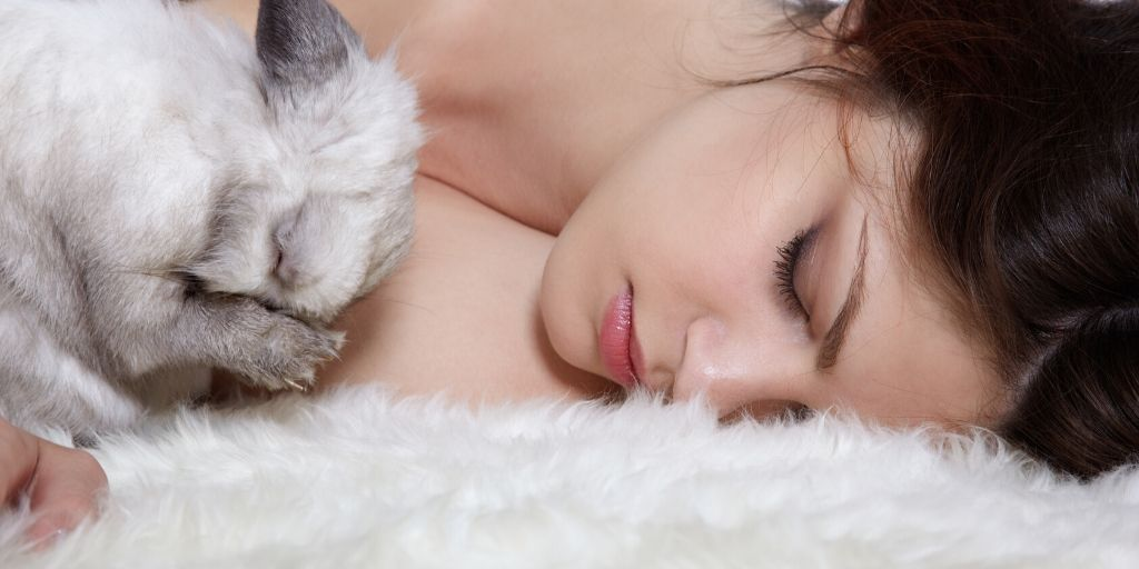 rabbit sleeping with owner