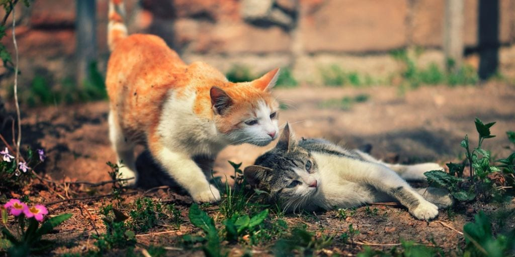 two cats in the garden