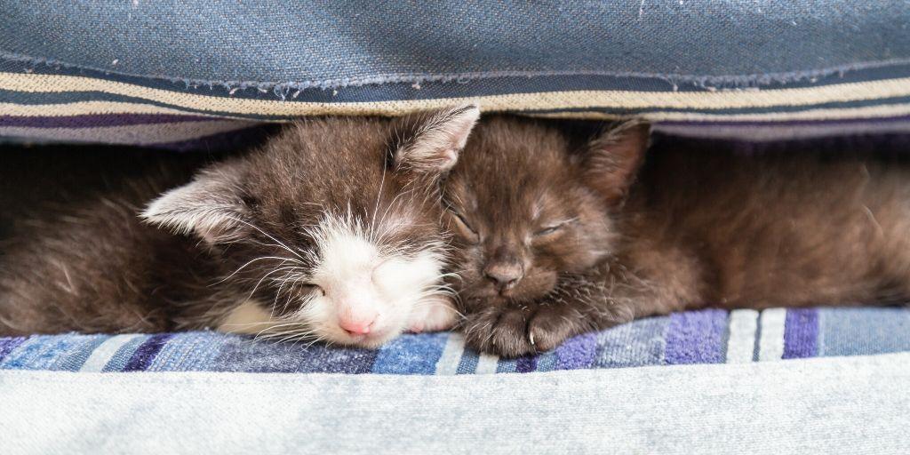 two kittens resting