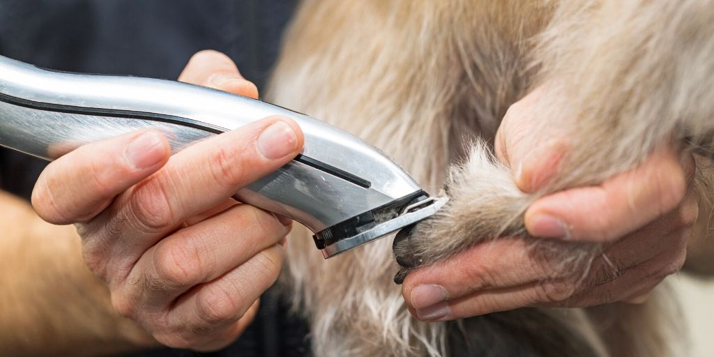 clipping a dogs paw with clippers