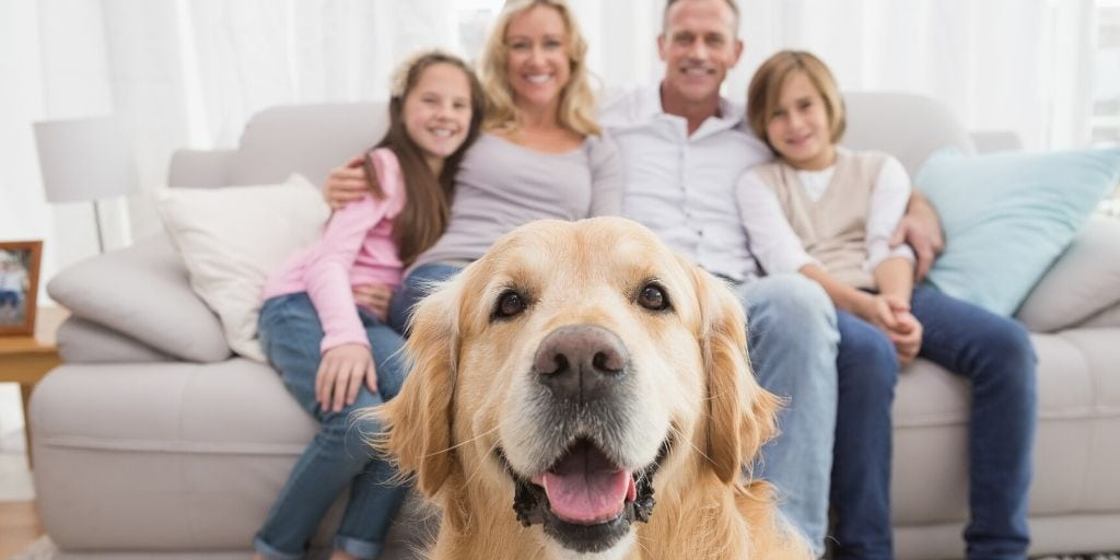 dog with his family