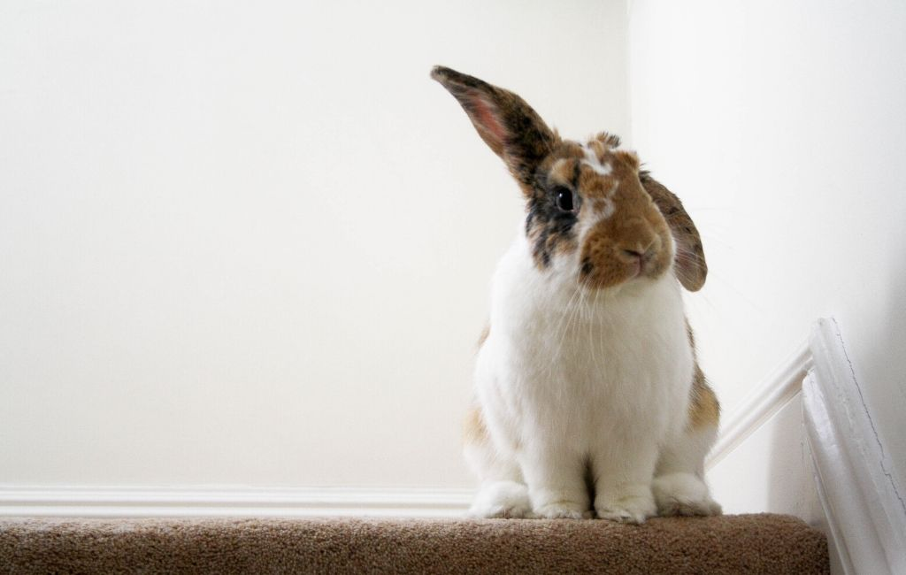 rabbit on the stairs