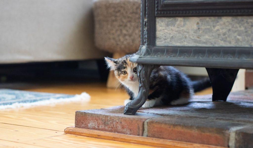 scared kitten hiding
