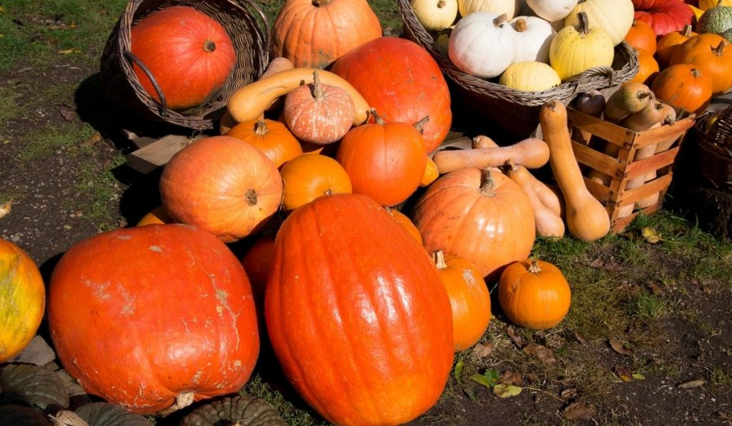 Difference types of pumpkins