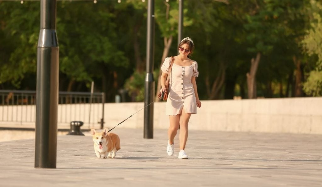 Woman and corgi walking outdoor