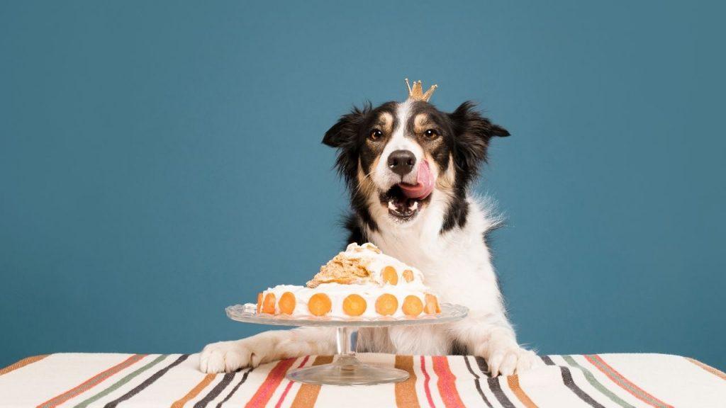 dessert named dog eating a dessert