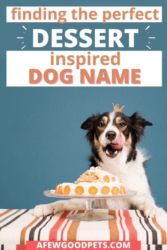 finding the perfect dessert dog name