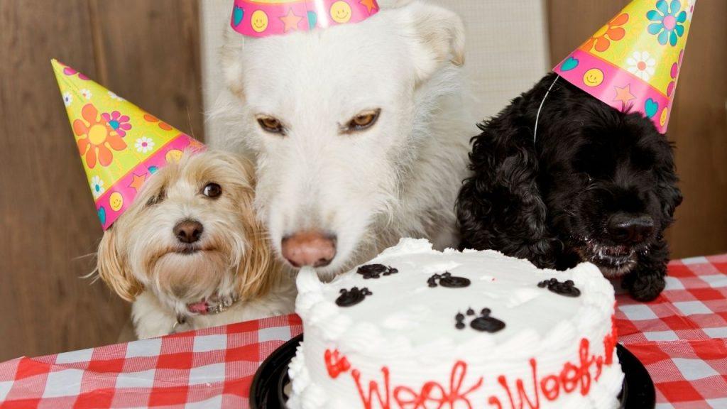 three dogs enjoying birthday cake
