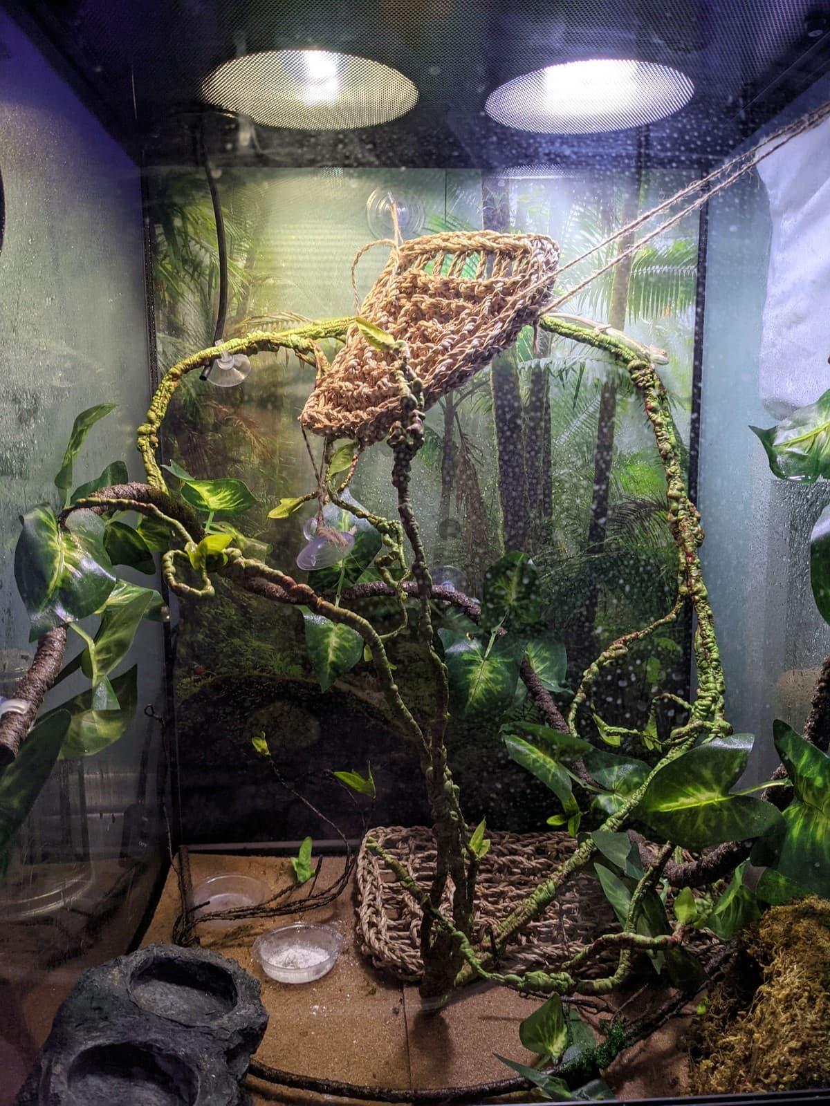 cage set up for a chameleon