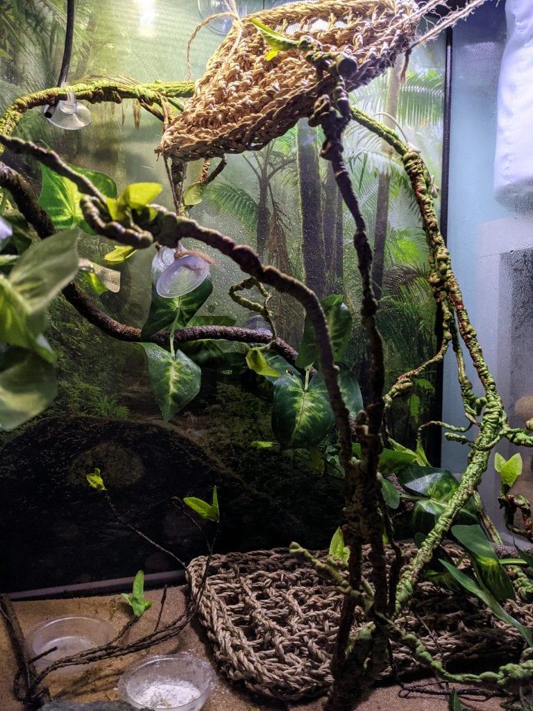cage floor set up for a chameleon