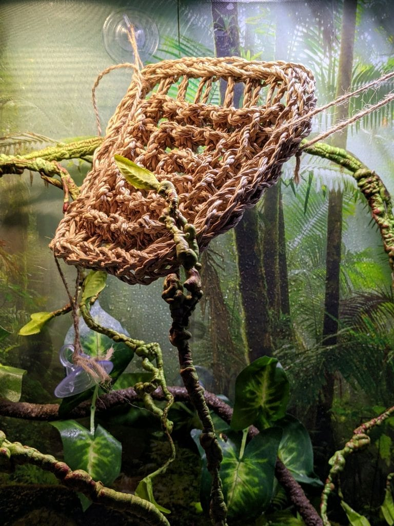 cage set up for a chameleon with artificial branches