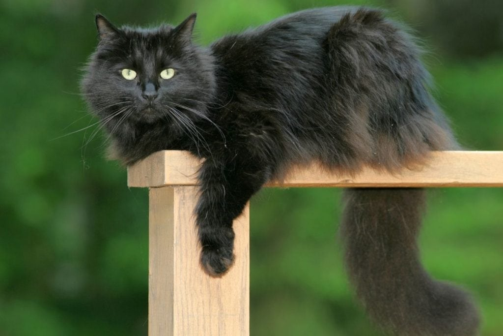 black cat on a fence post