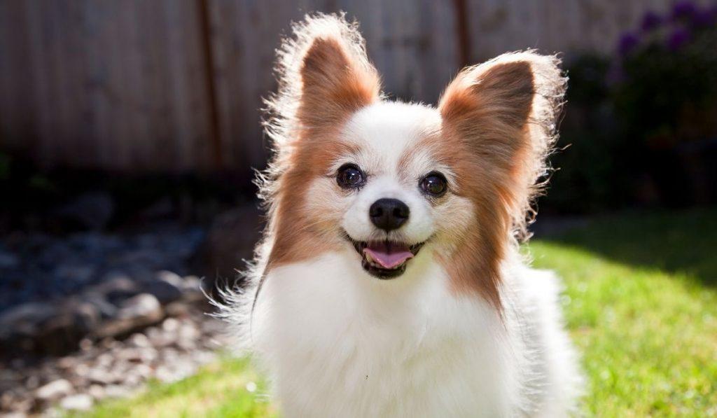 cute dog named Pasta