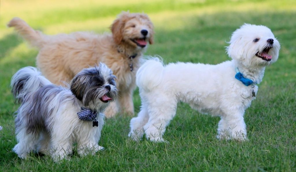dogs at the park