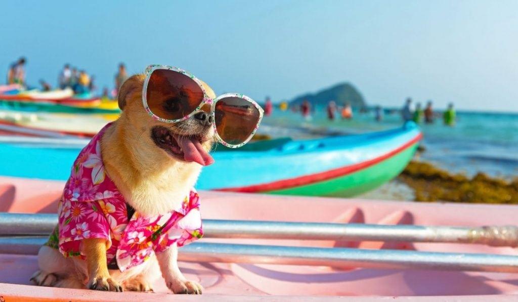 fun dog wearing sunglasses