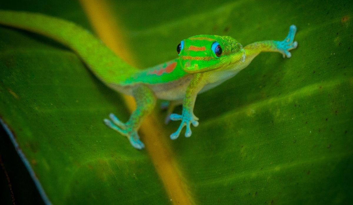 green-gecko-on-a-leaf