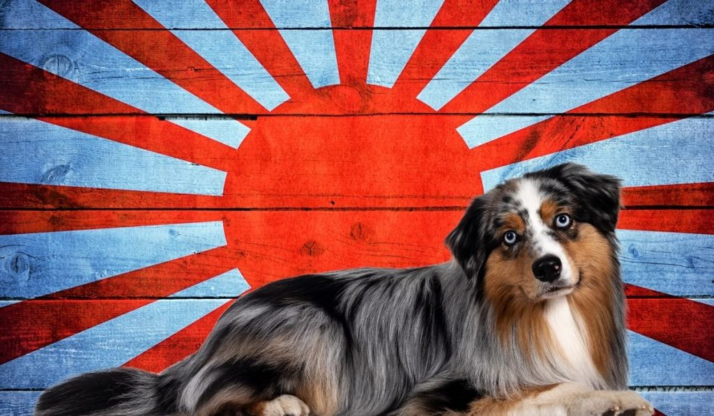 japanese food names for dogs