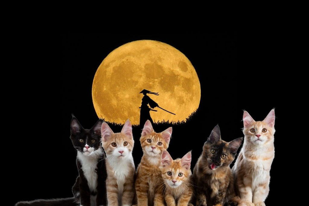 group of cats in front of a warrior background