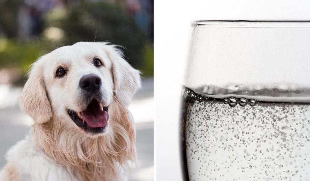 Dog-and-Sparking-Water