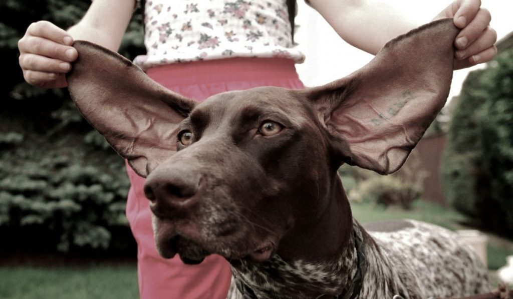 Dogs-Ears