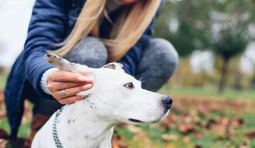 Girl Holding Dog Ears