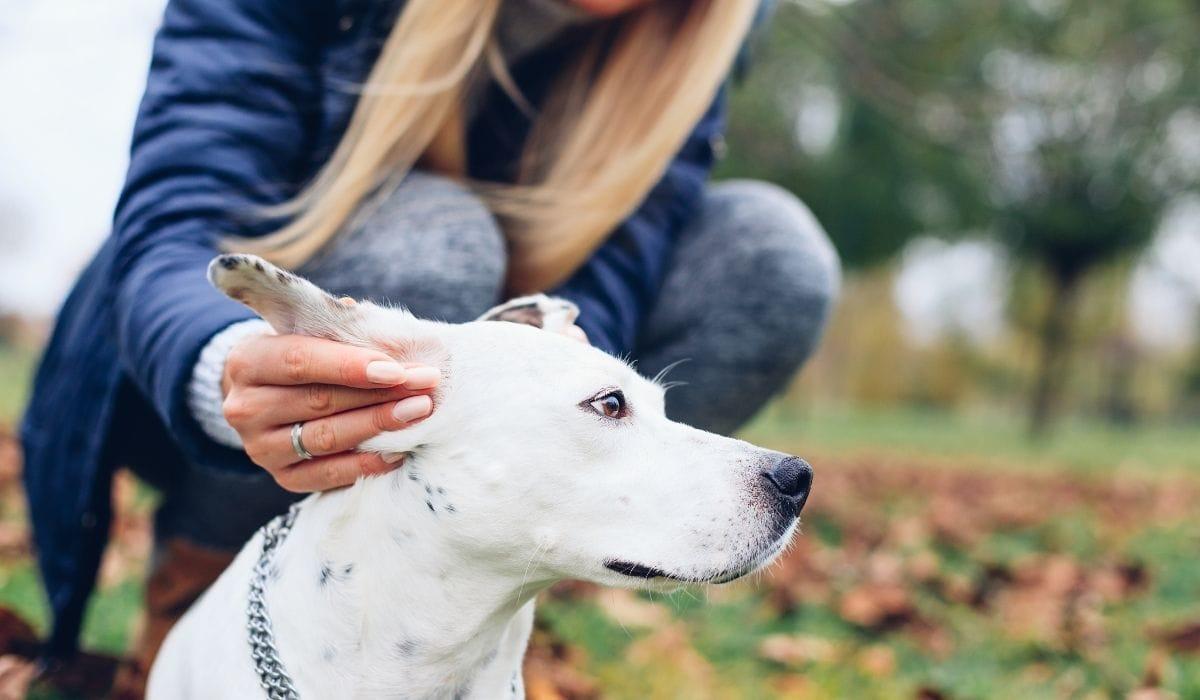 Girl-Holding-Dog-Ears