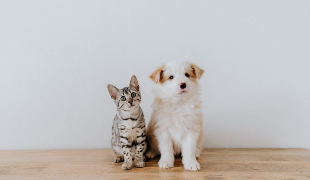 cat and dog sitting on wooden floor
