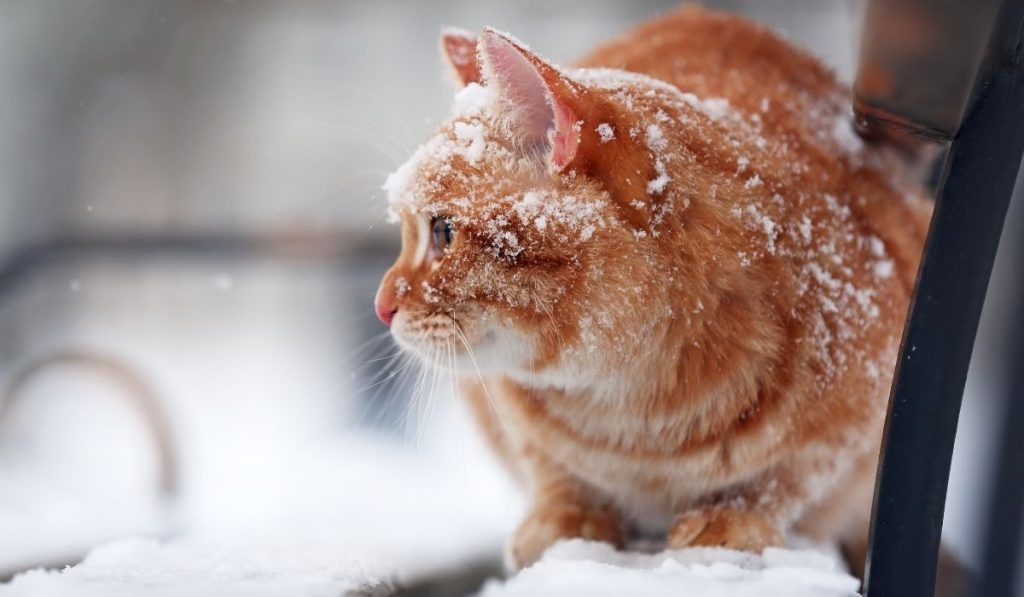 cold cat sitting on a beach outside in the snow