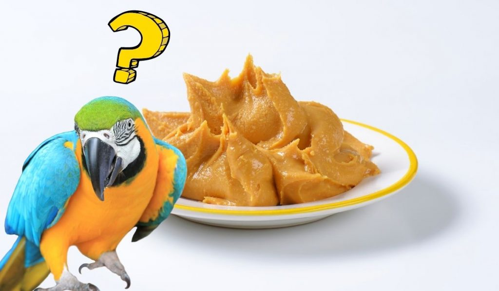 Parrot and Peanut Butter