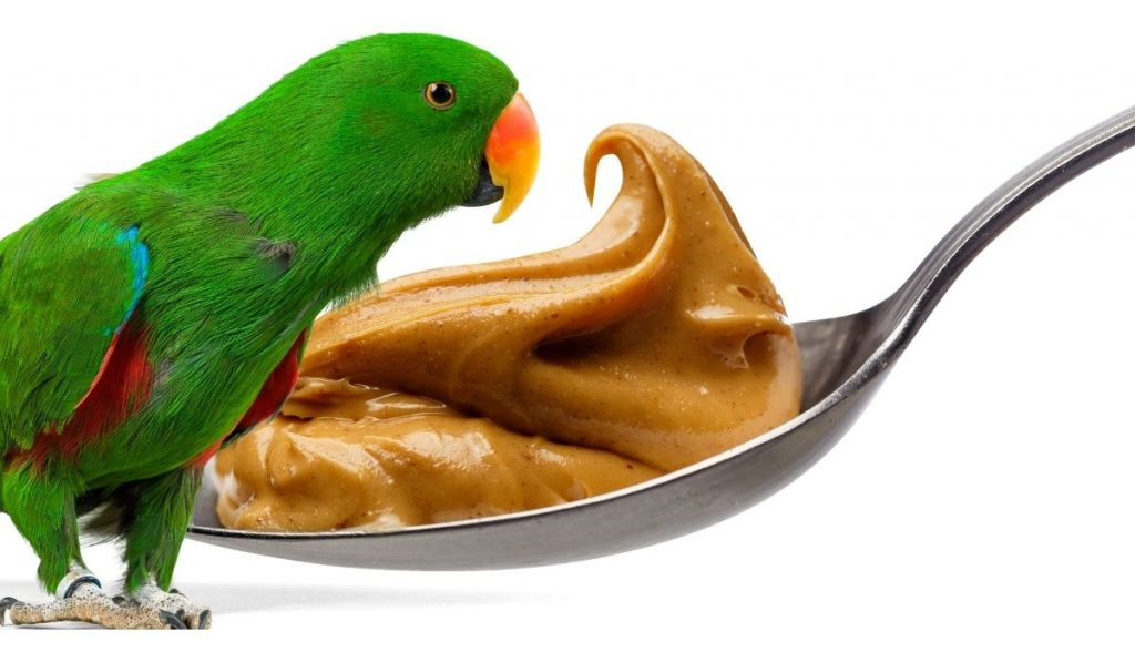 Parrot and Peanut Butter on Spoon