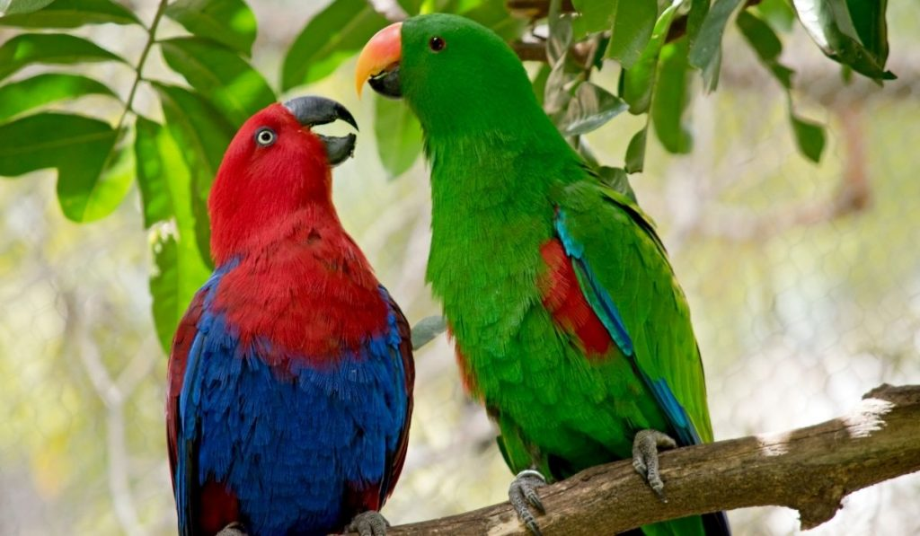 Two Parrots on Top Of Tree Branch