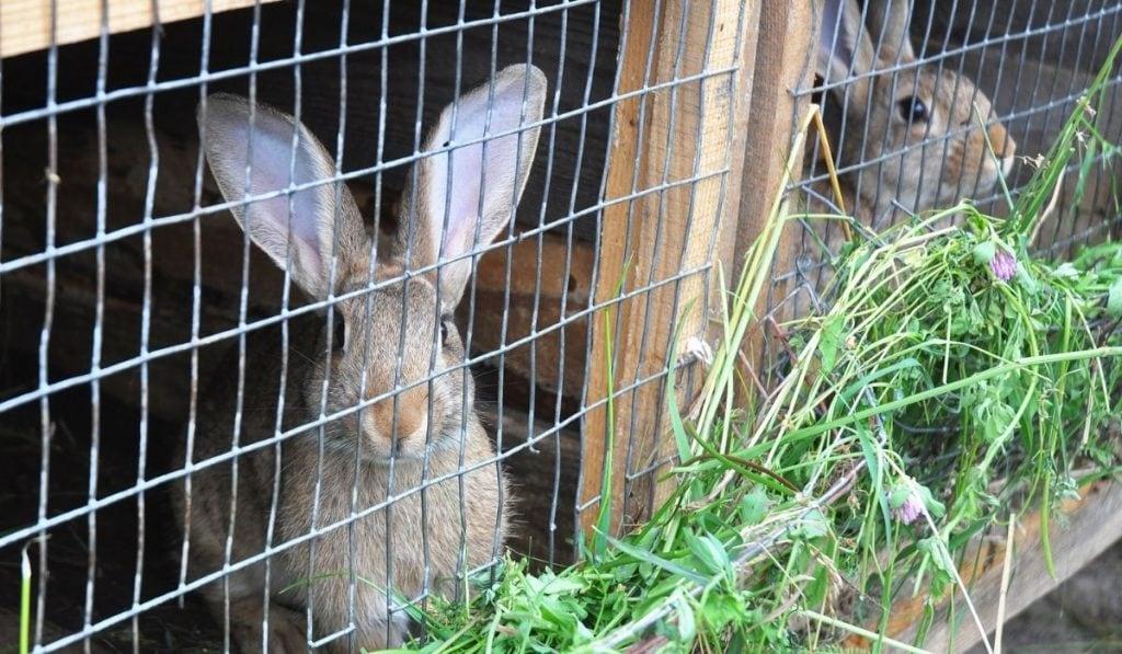 cat proof rabbit cage