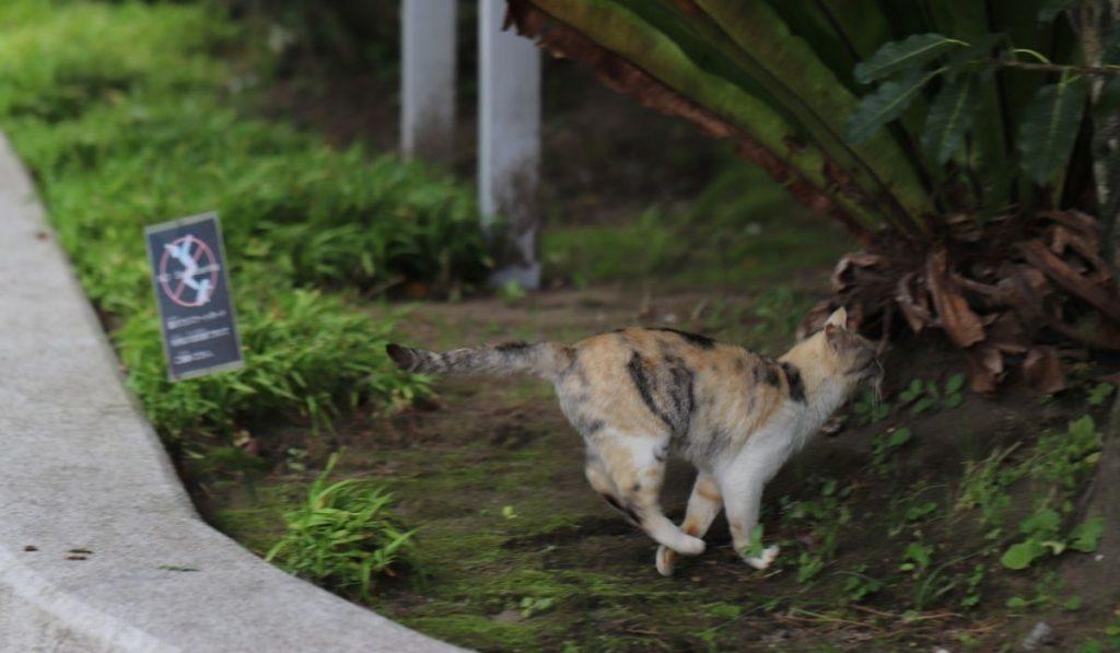 cat running away in the street