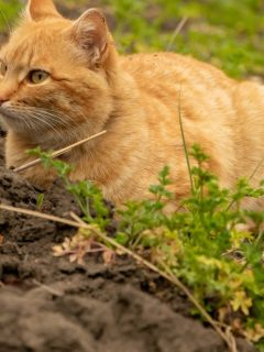 cat sitting on the parsley garden