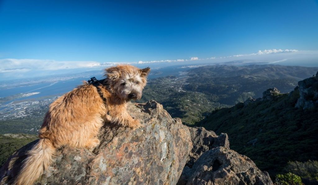 dog at the top of the mountain in the sunlight