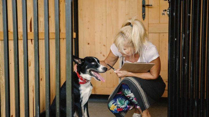 dog in a doggie daycare