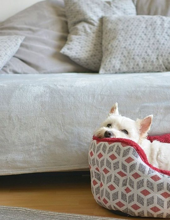 dog lies in his dog bed