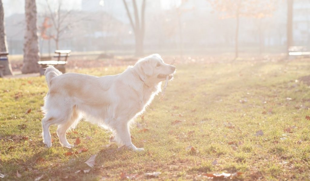 dog outdoor in the sunlight