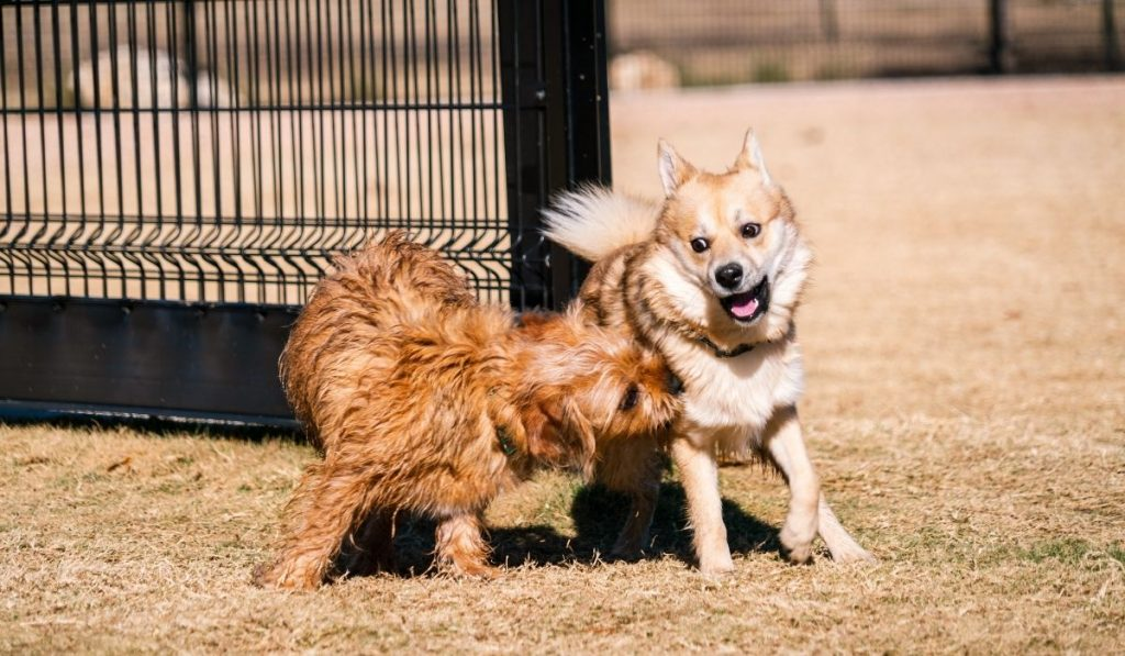 dog playing with another dog
