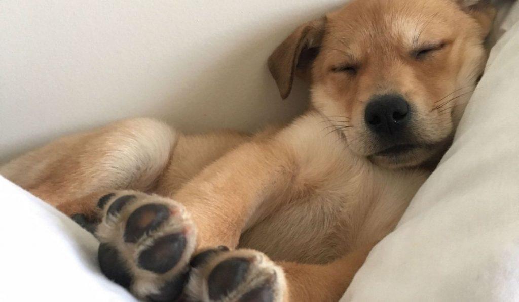 dog sleeping comfortably