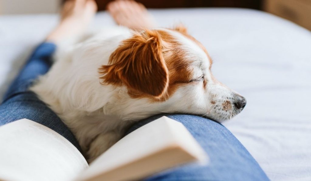 dog sleeping on a girl's lap while she is reading