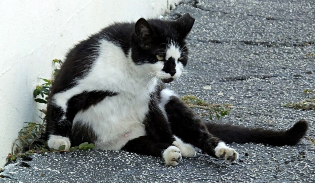 feral cat in the street