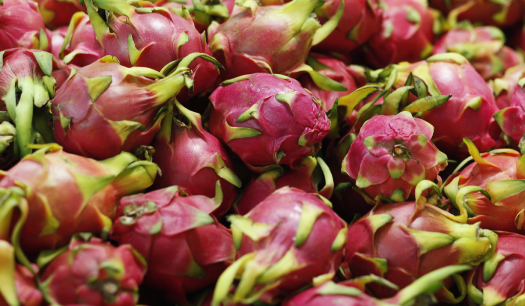 Newly harvested Dragon Fruit